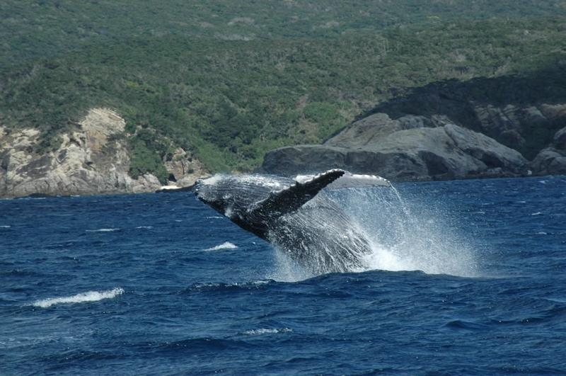 ザトウクジラの画像 p1_38